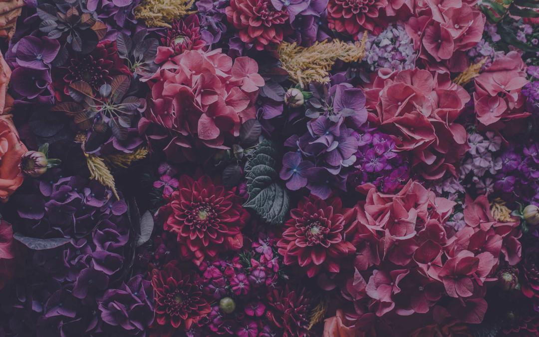 Beautiful Imagery